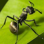 Download The Ants Underground Kingdom